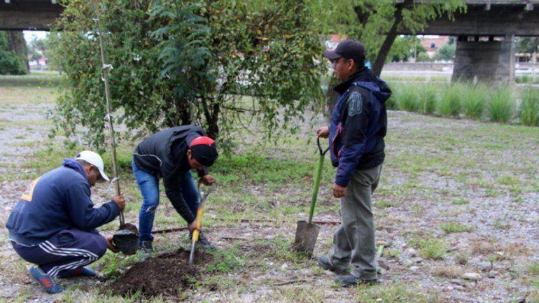 Repusieron más de 20 árboles daños en el parque Xibi Xibi