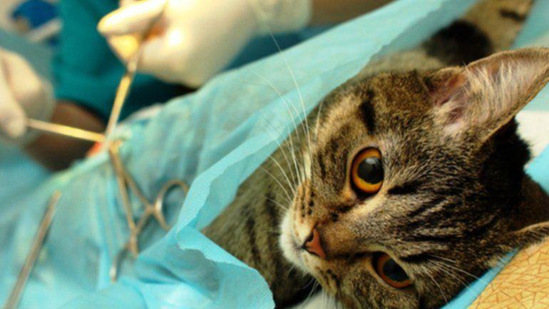 Hoy sigue la campaña de castración para perros y gatos en Palpalá