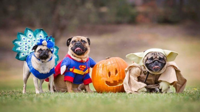 ¡Llevá a tu perro y divertite! ExpoCan con desfile y concurso de disfraces