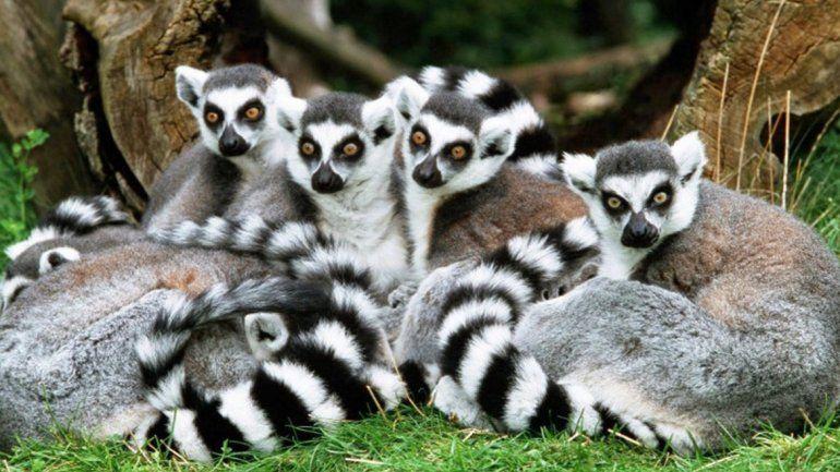 La sexta extinción masiva: la ONU alerta que un millón de especies están en peligro