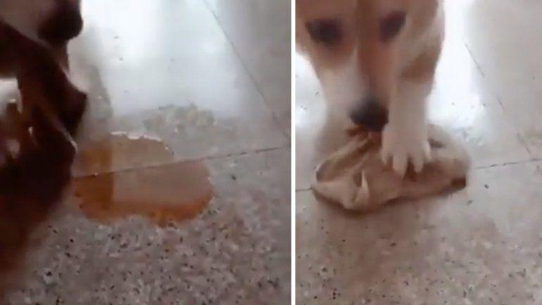 Un perrito educado: su dueño lo retó y sabía que tenía que limpiar su orina