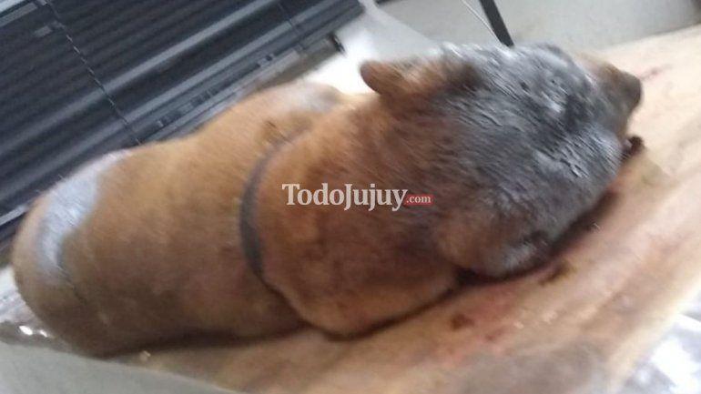 Mataron a un perro a machetazos y los vecinos buscan al culpable