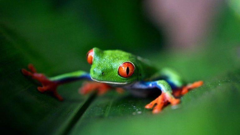 Por la actividad humana, la biodiversidad disminuye a un ritmo acelerado y hay casi un millón de especies en riesgo