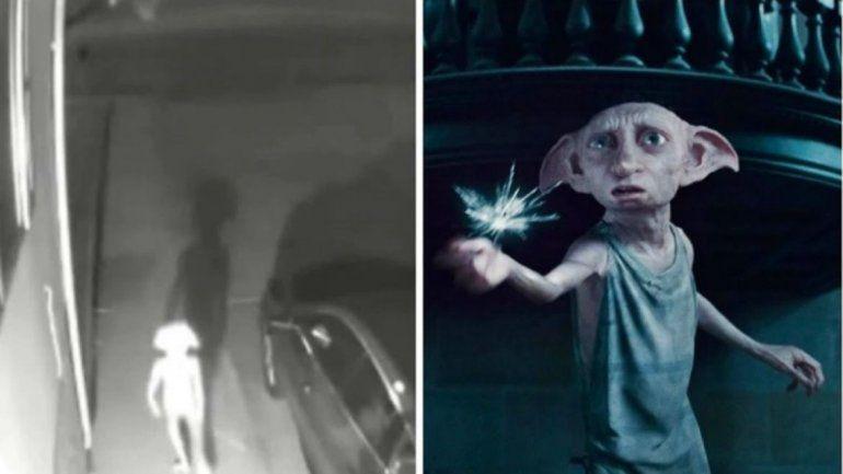 Captaron en un video en Colorado a una extraña criatura idéntica a Dobby, el elfo de Harry Potter