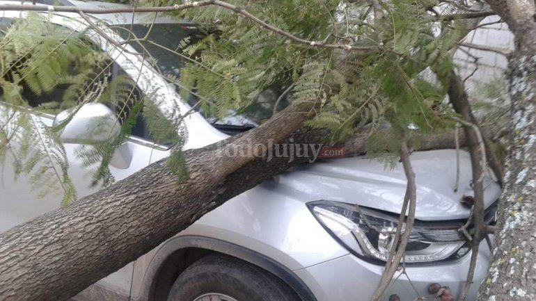 Fuertes vientos provocaron la caída de árboles y carteles en San Pedro