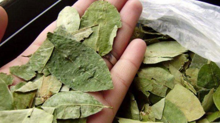Por el Arenavirus en Bolivia, aconsejan no consumir hojas de coca