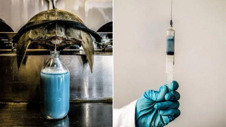 El litro de sangre azul cuesta 15 mil dólares