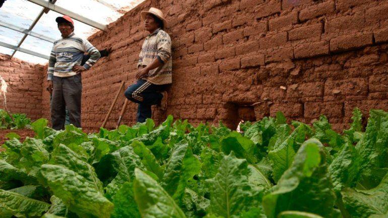 Promueven cultivo y consumo de frutas y verduras en la puna jujeña con invernaderos