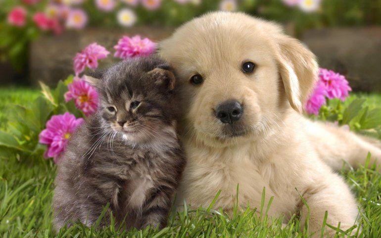Confirmado: acariciar perros y gatos genera un rápido alivio del estrés