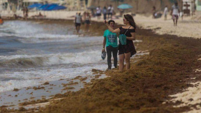 El sargazo llegó a las playas del Caribe tiñendo el agua de marrón con olor a podrido