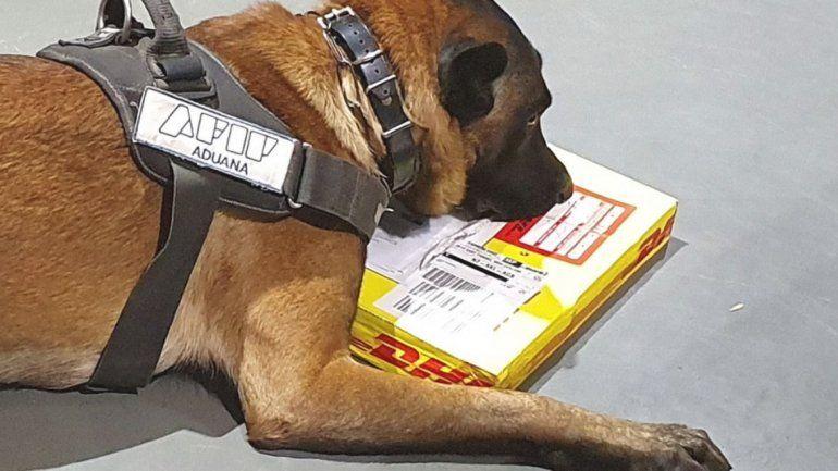 Perros de aduanas detectaron cocaína y éxtasis en encomiendas