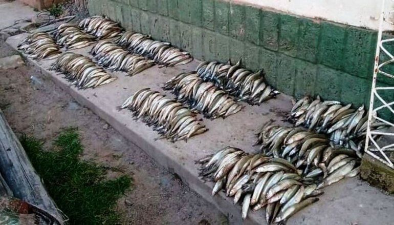 Salta: detienen a pescadores con más de 1.300 pejerreyes que iban a vender en Jujuy