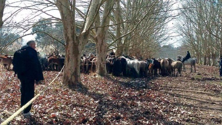Maltrato animal en Ezeiza: encontraron 420 caballos desnutridos y otros 25 muertos