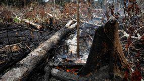 Incendio en el Amazonas: cuáles son las especies animales más amenazadas