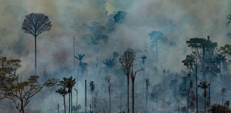 Trabajan en Jujuy sobre metodologías para cuidar los bosques del mundo