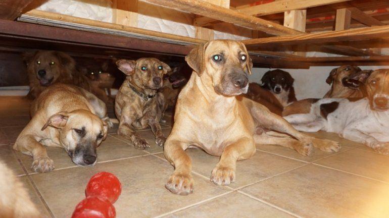 Una mujer de las Bahamas alojó a casi 100 perros en su casa para salvarlos del huracán Dorian