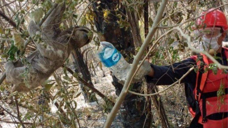 Jujeños siguen dando batalla al fuego en la zona boscosa de Bolivia