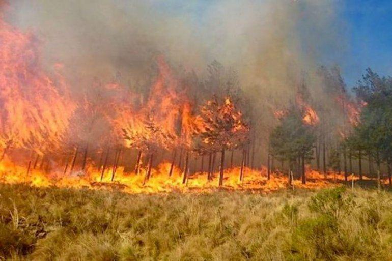 Sigue complicada la situación en Bolivia: hasta el momento se incendiaron 2 millones de hectáreas