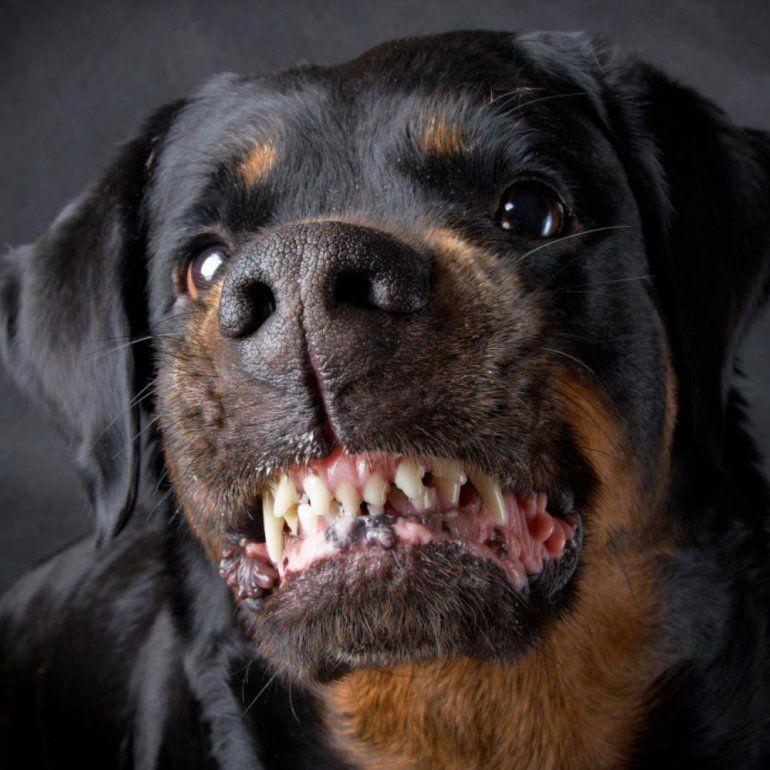 En Abra Pampa tienen un impuesto por tener más de dos perros