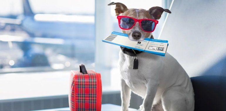 Todos los tips para viajar con tu mascota en auto o en avión