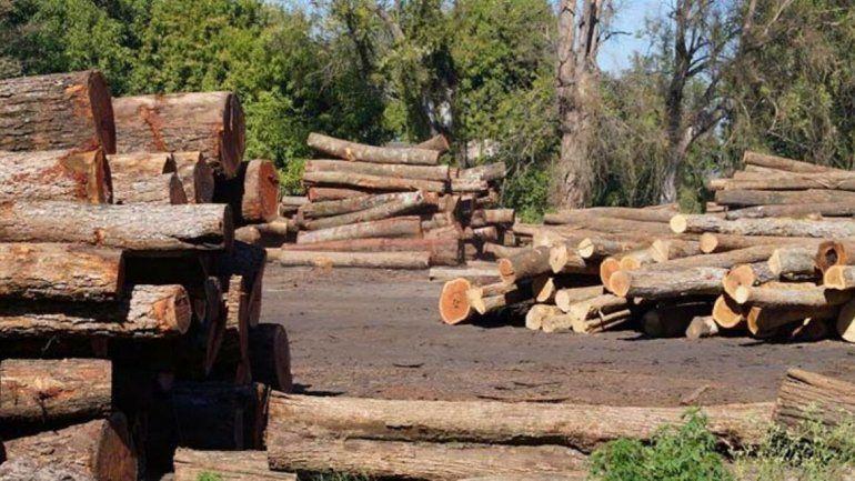 Presentaron un Plan Estratégico de Gestión Forestal amigable con los bosques nativos