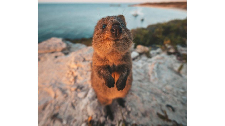 Finalistas de las fotos más graciosas de la vida silvestre
