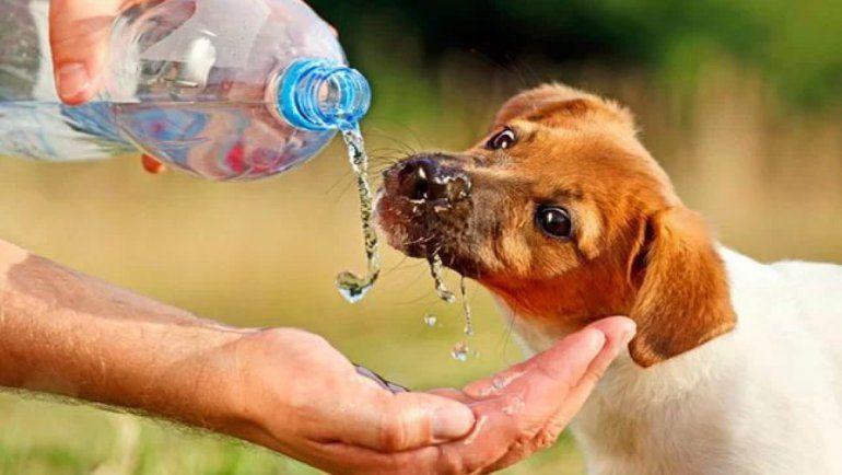 Tips para cuidar a las mascotas durante el golpe de calor