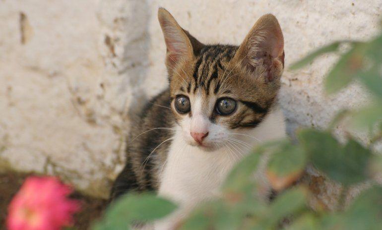 ¿Se perdió tu gato? Cinco tips para tener en cuenta a la hora de buscarlo