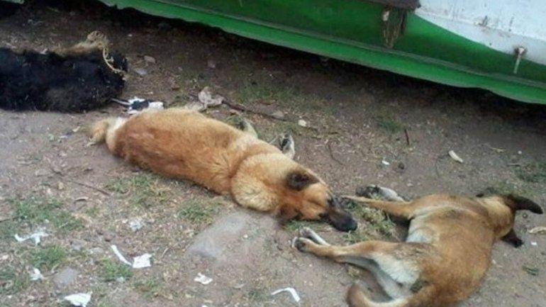 Investigan el envenenamiento de más de 15 perros en Salta