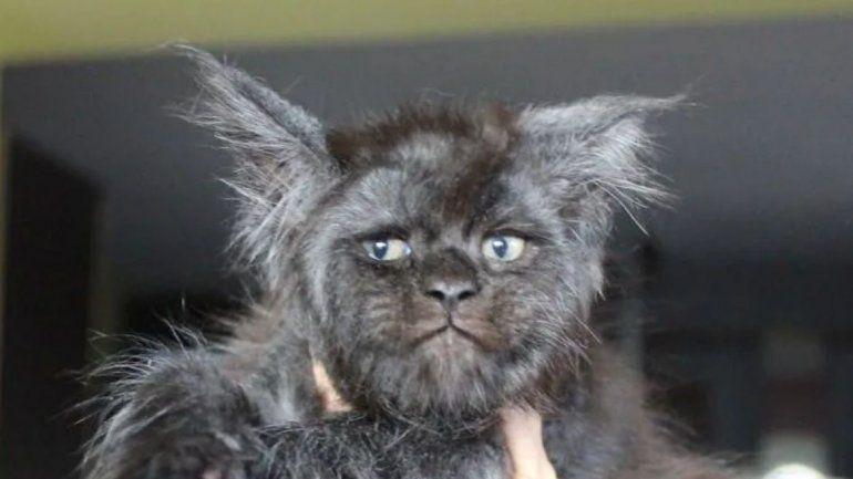 El gato con cara de humano que revolucionó las redes sociales