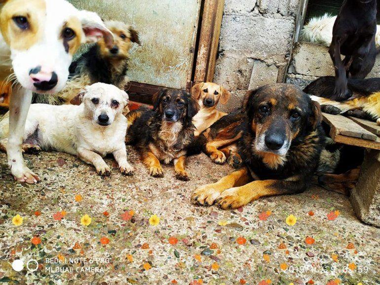 El Hogar San Roque está colapsado: tiene 440 perros en adopción y necesita alimento