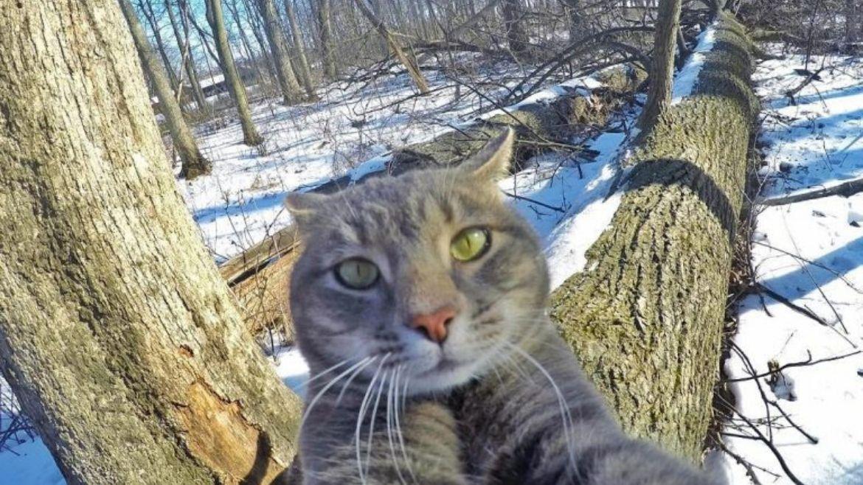 El gato que se saca selfies con sus amigos y hace furor en las redes sociales