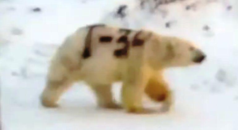 Pintaron un extraño mensaje sobre un oso polar y podría ser mortal para el animal