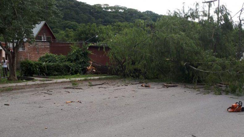 Caída de un árbol provocó problemas en Villa jardín de Reyes