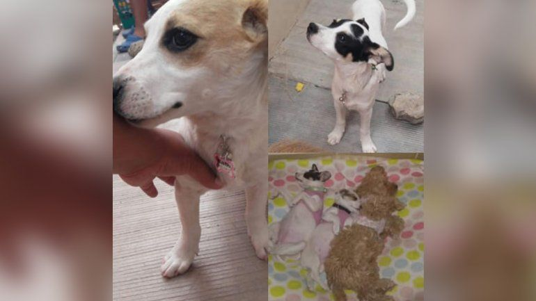 Dos perritas adoptadas del hogar San Roque murieron por la pirotecnia