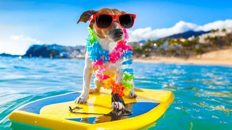 ¡Todos a la playa! Recomendaciones para viajar con tu mascota