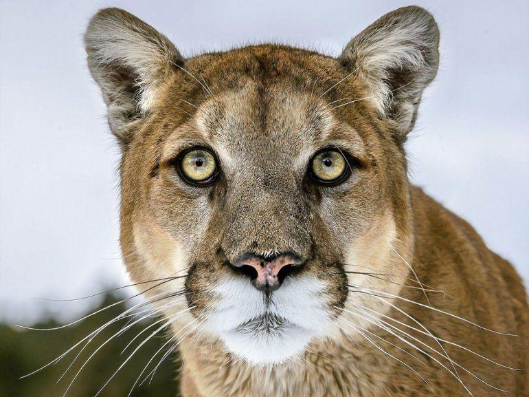 Más de 10 especies que habitan en Jujuy están en peligro de extinción