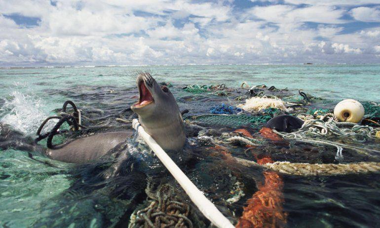 Buscan crear un plan para reciclar 200 toneladas de redes de pesca que contaminan el mar argentino