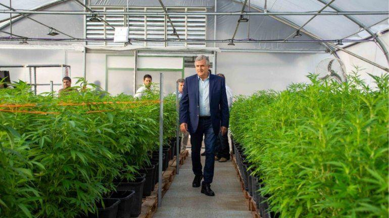 Gerardo Morales: este año fabricaremos el primer aceite de cannabis medicinal de la Argentina