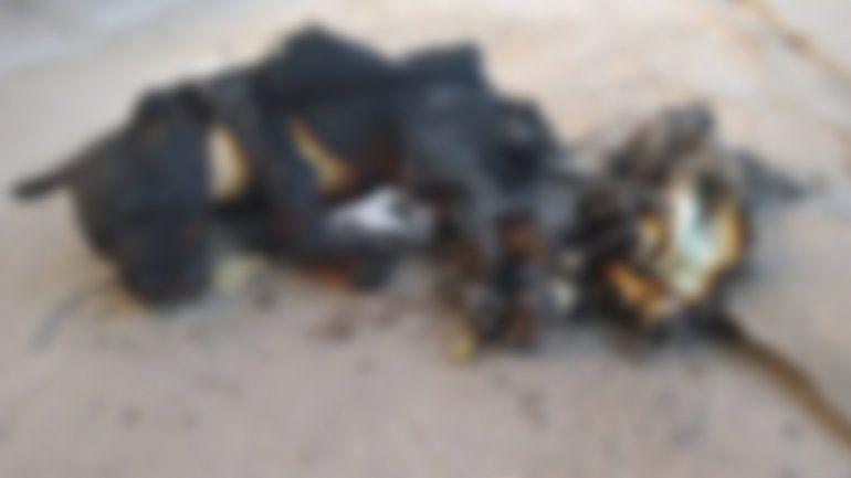 Indignante maltrato animal en San Pedro: quemaron un perrito