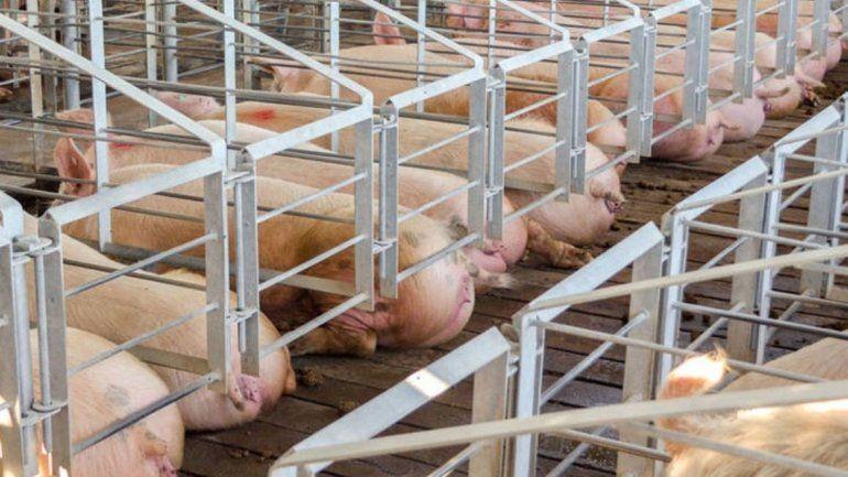 Megagranjas porcinas