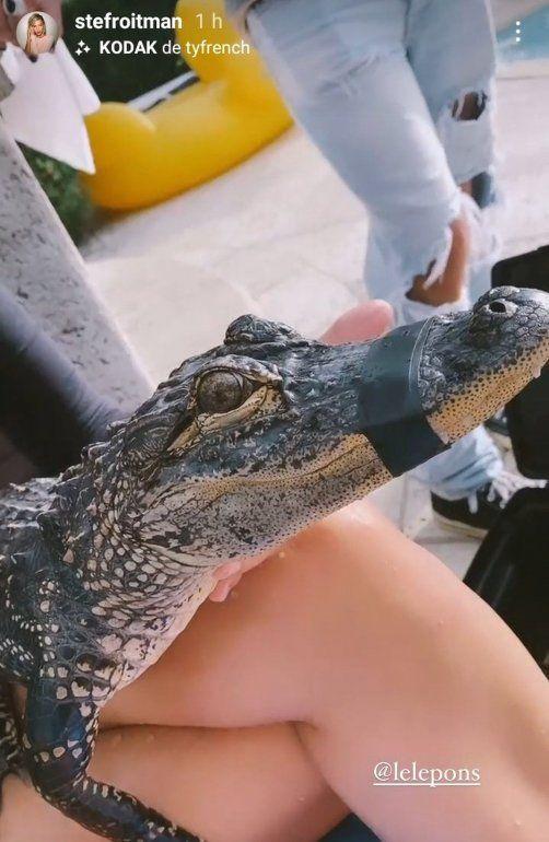 Stefi Roitman y Lele Pons posaron con un lagarto amordazado en una pileta y fueron acusadas de maltrato animal