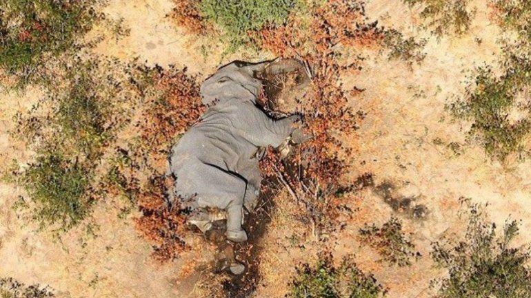 Muerte de elefantes: fin del misterio