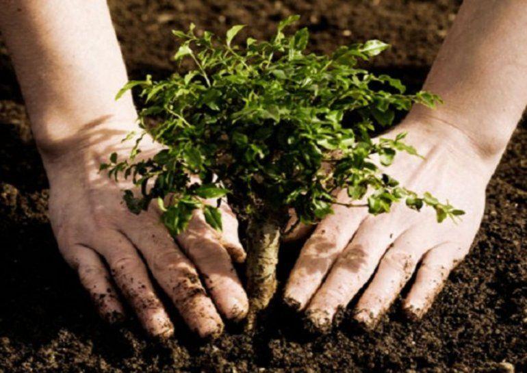 Los vecinos pueden pedir un árbol a la Muni para su vereda