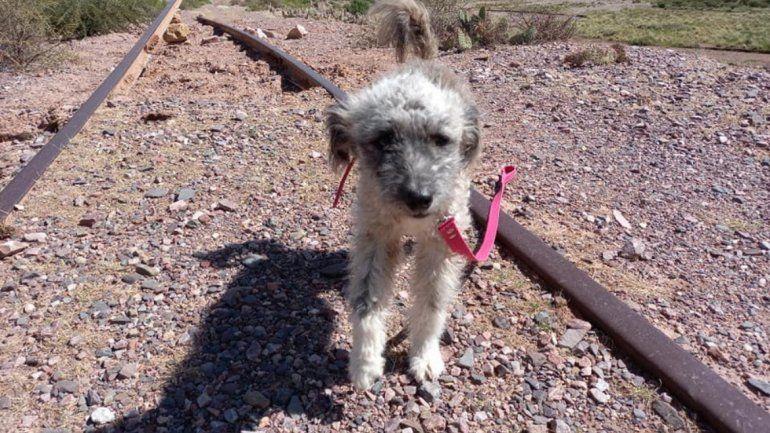 Vino de vacaciones a Jujuy, encontró una perrita abandonada y se la llevó a Buenos Aires