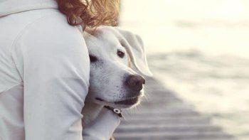 Abrazar perros es bueno para la salud mental.
