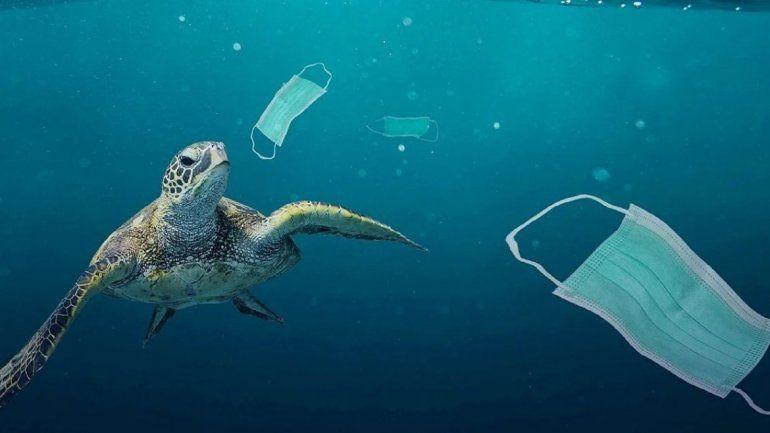 Pandemia de plástico: mares y océanos están llenos de EPP