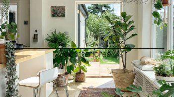 Con la pandemia se ha puesto de moda renovar los hogares con mucha vida, esto se logra con plantas de hojas grandes y bien verdes. Otro de los temas es el riego