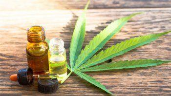 Cannabis medicinal. /Imagen ilustrativa.