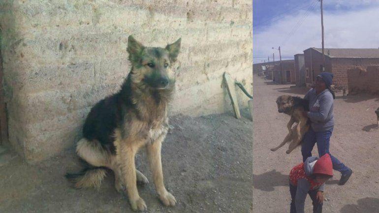 La historia del perro de Violeta Ávalos que ayudó a encontrar a la joven